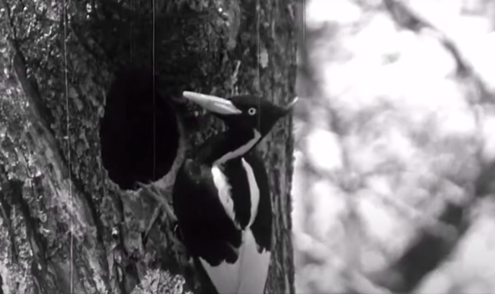 Τέλος 23 είδη πτηνών και θαλασσινών – Κηρύσσεται και επίσημα η εξαφάνισή τους