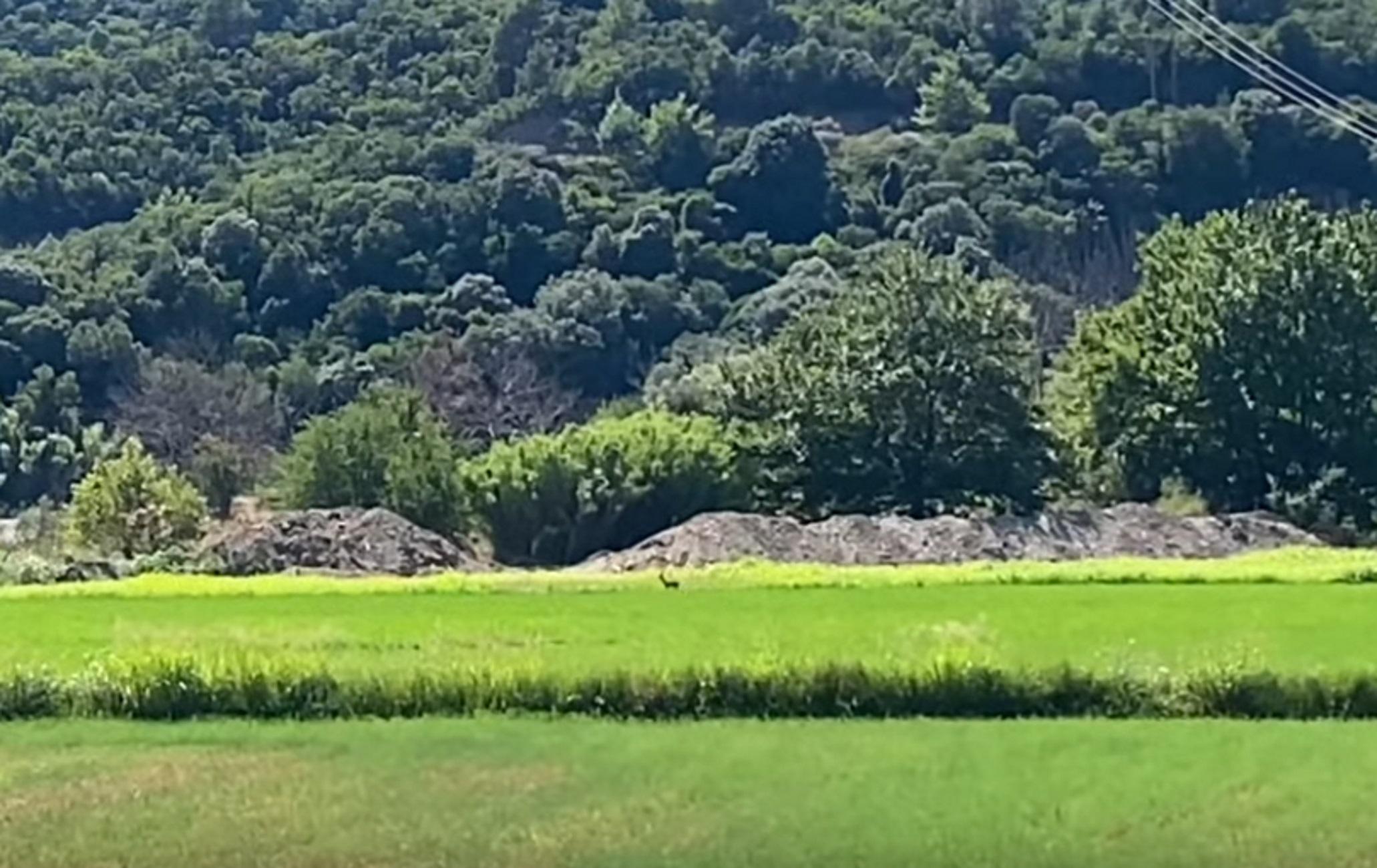 Ναυπακτία: Άφησε ανοιχτό το κινητό του τηλέφωνο και κατέγραψε αυτές τις εικόνες στον Εύηνο ποταμό