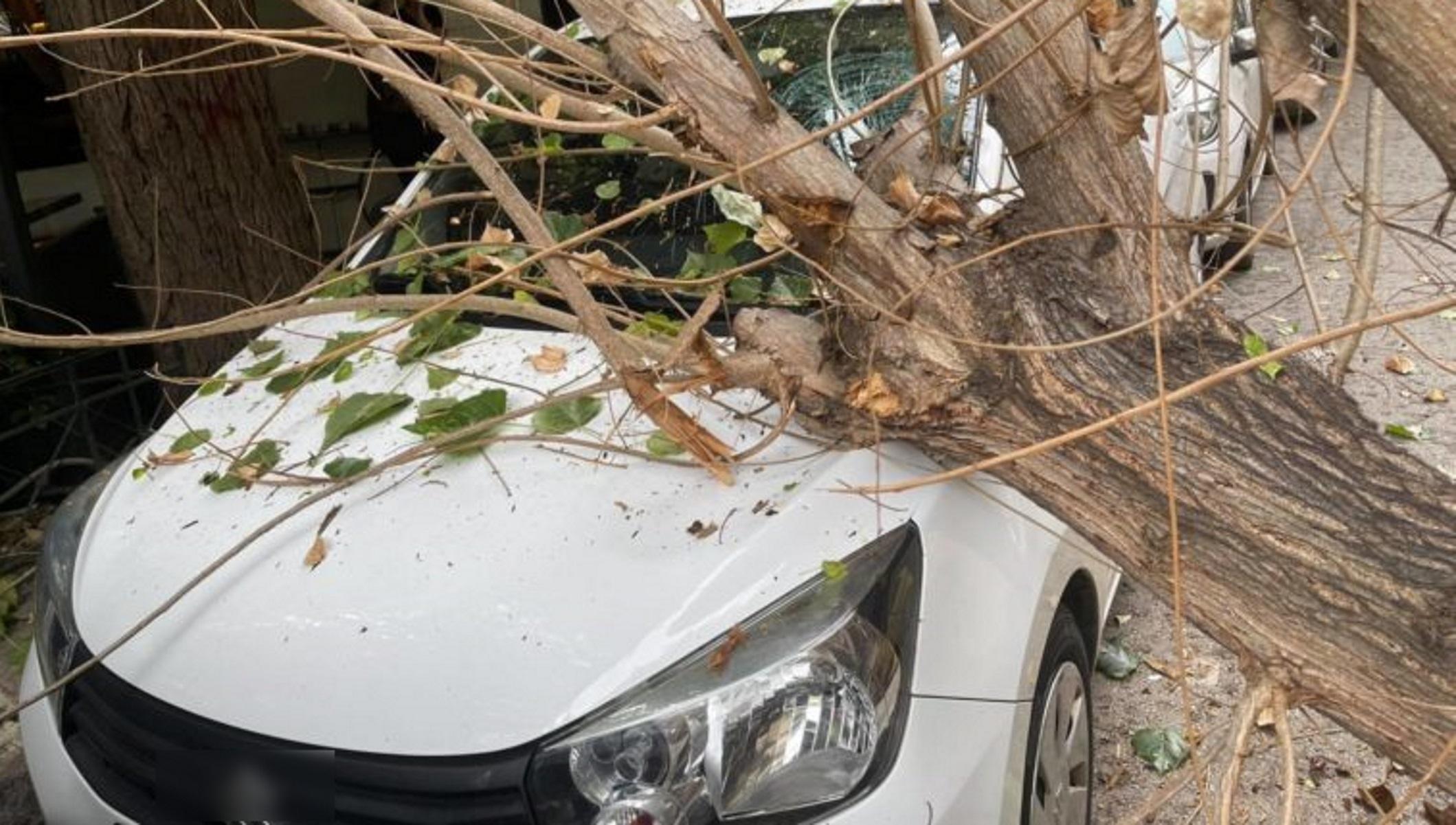 Παγκράτι: Δέντρο «προσγειώθηκε» σε παρκαρισμένο αυτοκίνητο – Η πτώση που τρόμαξε κόσμο