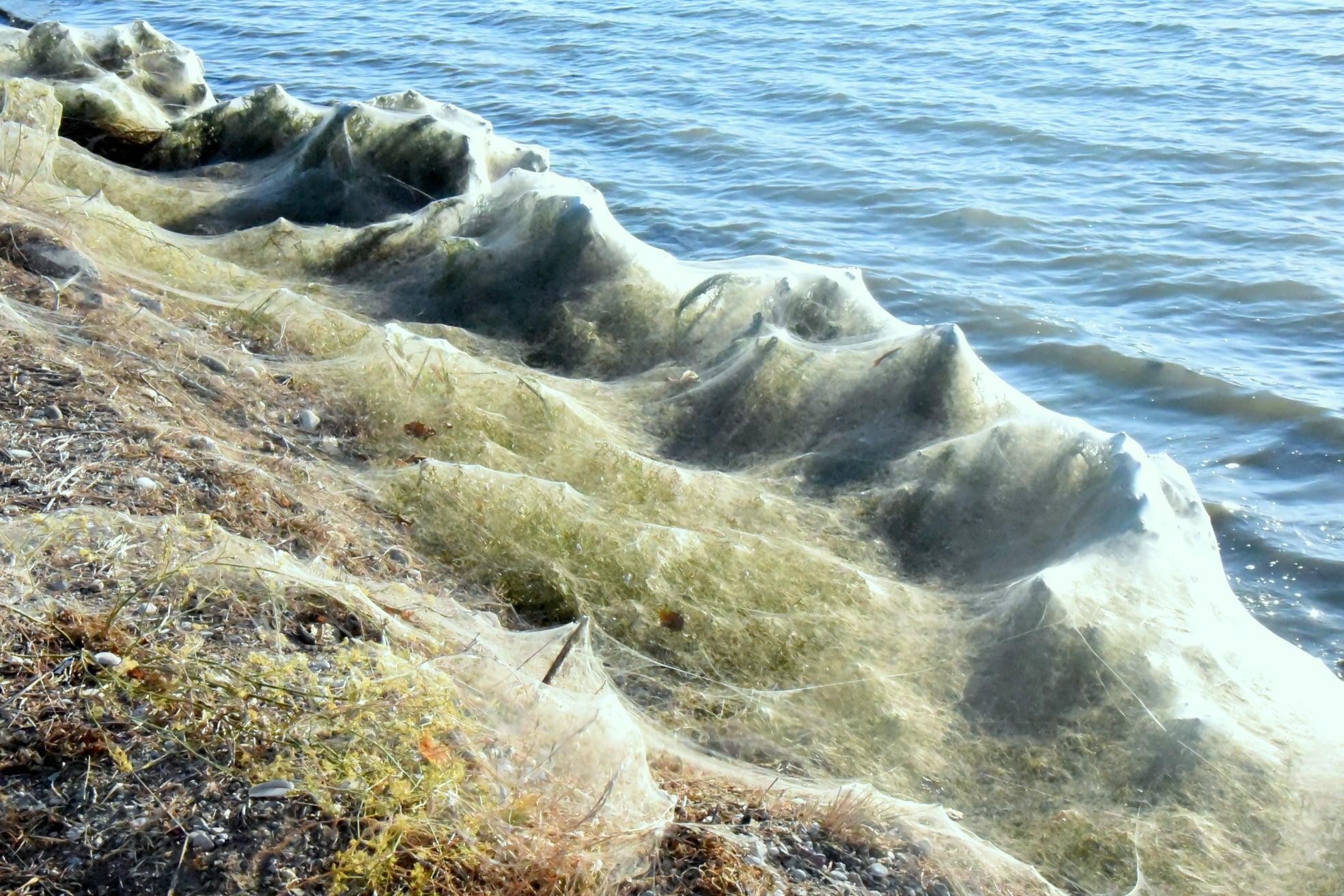 Αιτωλικό: Ιστοί από αράχνες σκέπασαν τα πάντα στη λιμνοθάλασσα! Εντυπωσιακές και απόκοσμες εικόνες