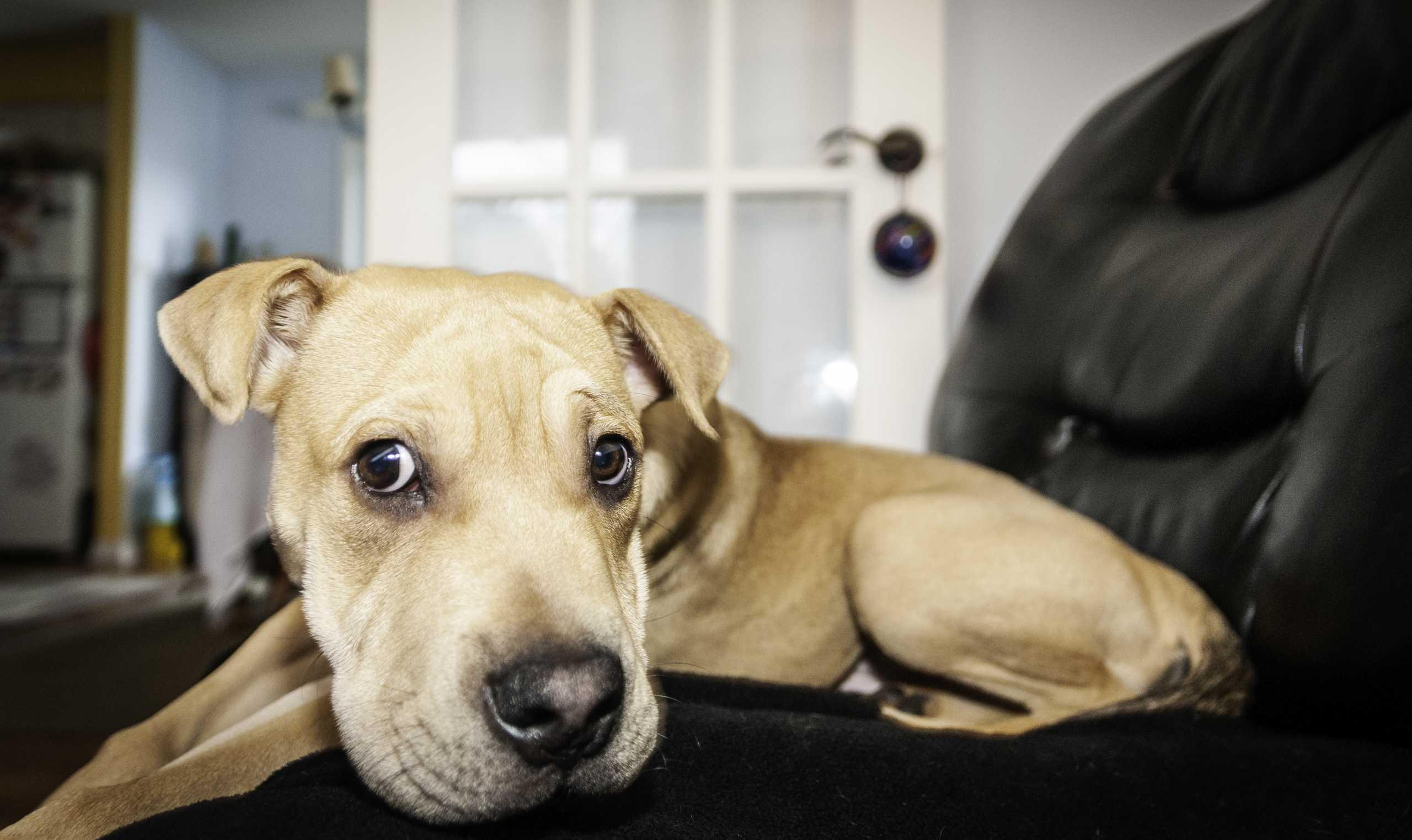 LuvMi: Άνοιξε την καρδιά και το σπίτι σου σε έναν σκύλο που ζει στο καταφύγιο