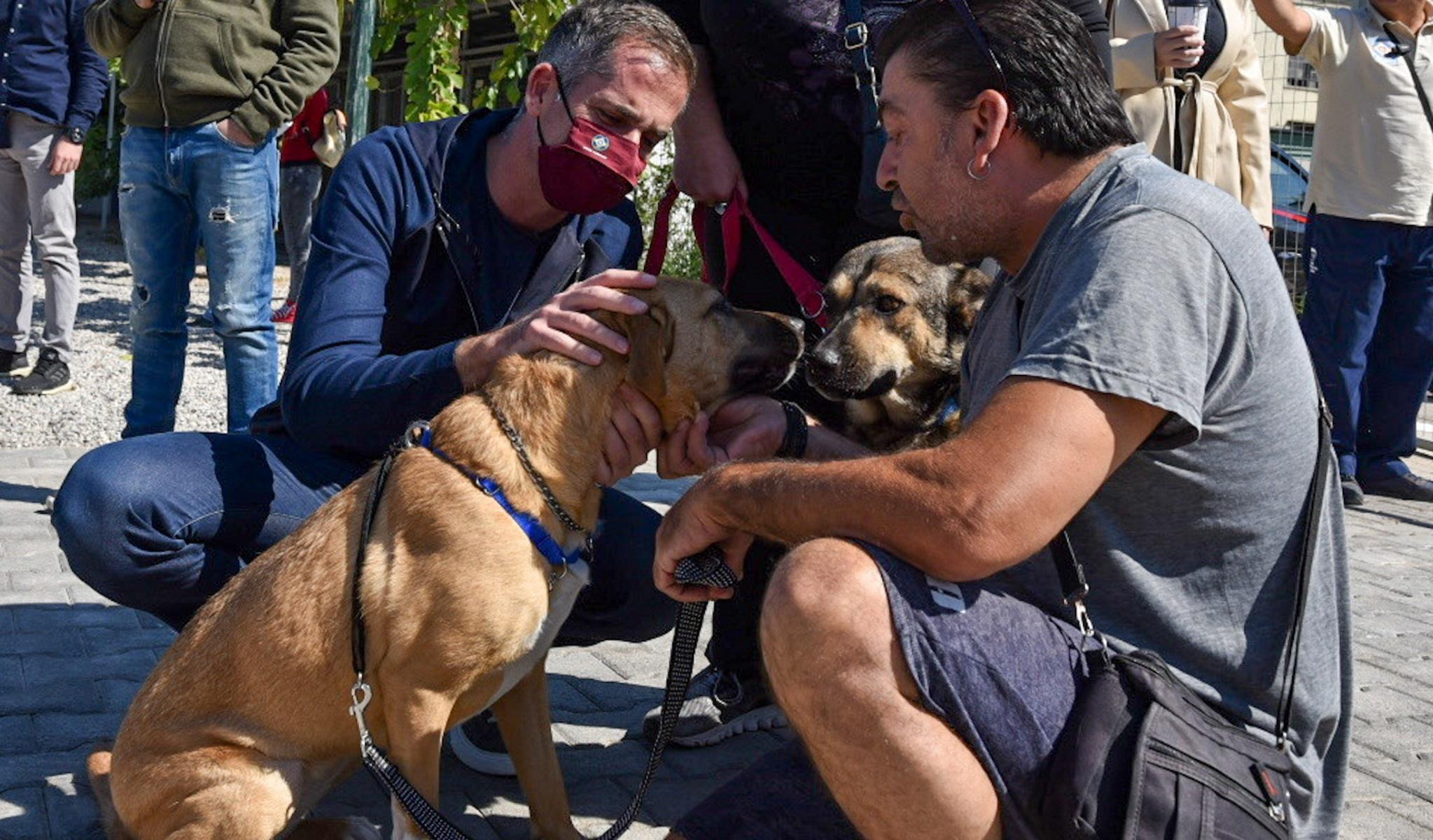 Παγκόσμια Ημέρα των Ζώων – Ο Κώστας Μπακογιάννης παρέα με αδέσποτα στο Καταφύγιο του Σωκράτη