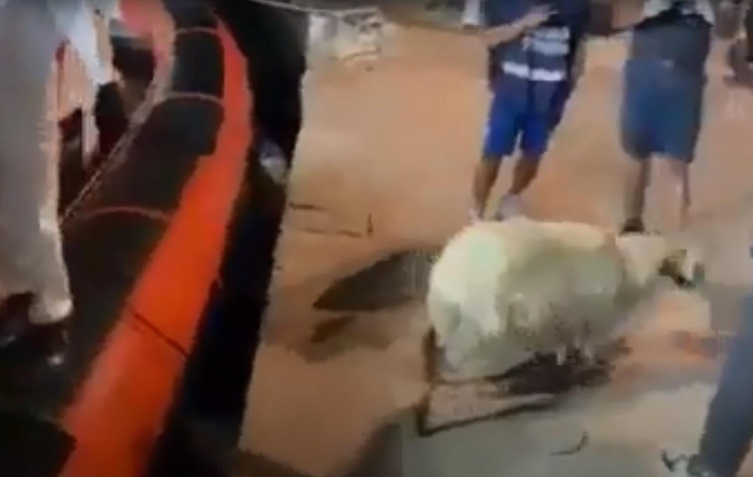 Ιταλία: 400 μετανάστες και ένα… πρόβατο αποβιβάστηκαν στη Λαμπεντούζα