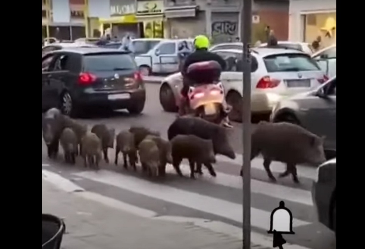 Ρώμη: Εκλογή νέου δημάρχου την ώρα που αγριογούρουνα «ρημάζουν» την πόλη